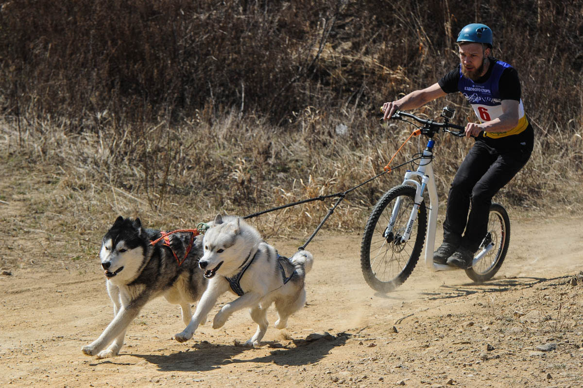 vladivostok-dogs-3